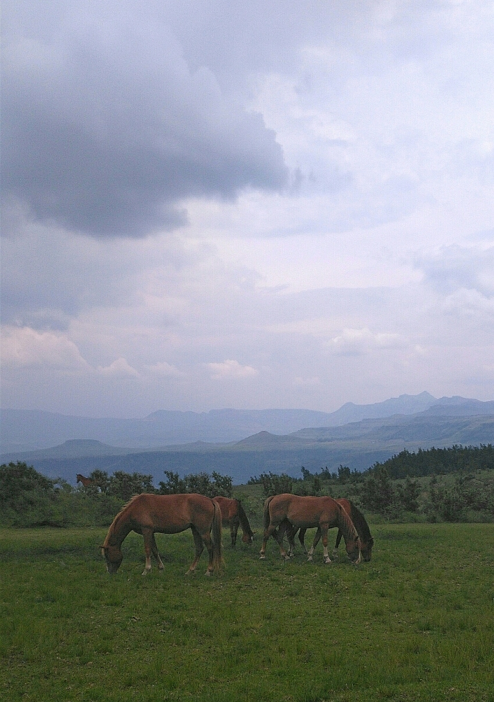 Horses at the Drakensberg Mountain Retreat with view of the mountains