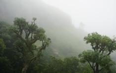 drakensberg-mountains-amphitheater-royal-natal-national-park-tiger-falls-hike-in-fog-2